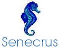 Senecrus (Rungis)-Cuisson de crustacés