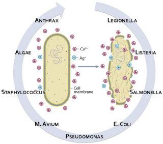 Pathogènes atteints par Cuivre & Argent